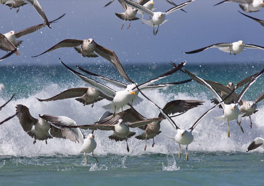 Falklandsöarna