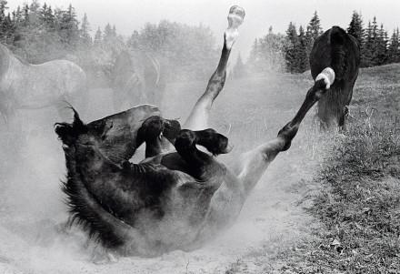 Yster häst