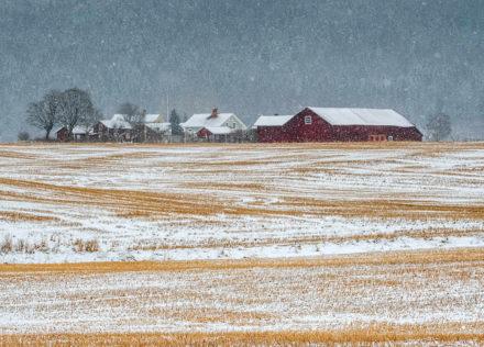 Vinter odlingslandskap